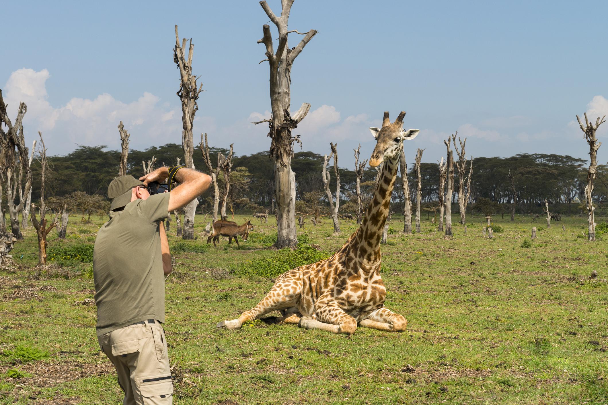 Att fotografera djur